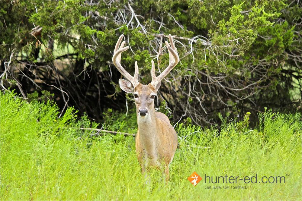 www.hunter-ed.com